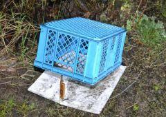 Utopił kota sąsiadki - kulisy zemsty hodowcy gołębi