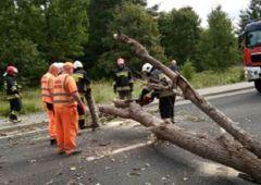 Drzewo przewróciło się na jadący samochód